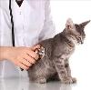 Ветеринарные клиники в Тоншаево